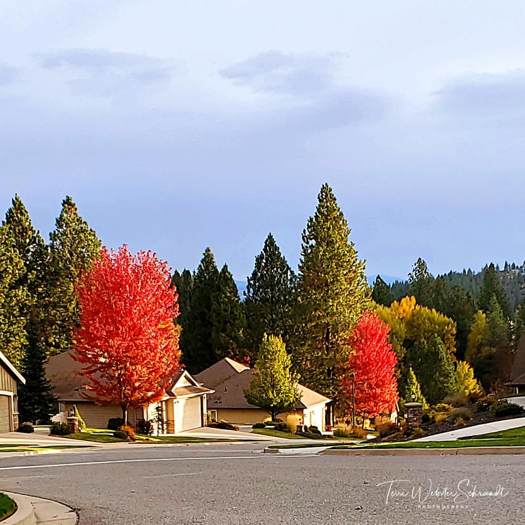 Glowing Auburn leaves