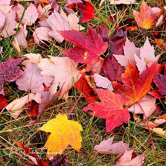 Auburn leaf carpet