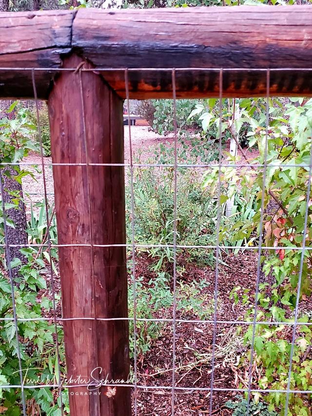 Pine Pole Fence