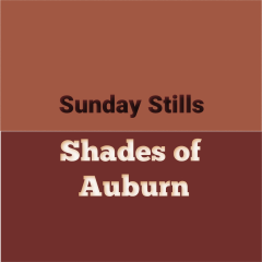 Auburn Color Graphic