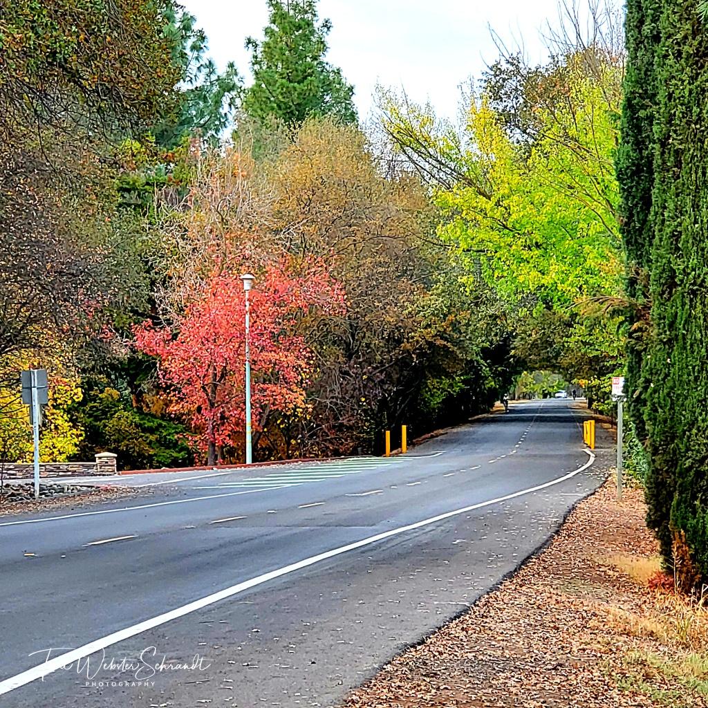 Road to Bike Trail