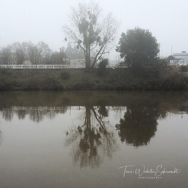 Foggy river reflection
