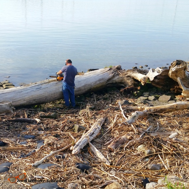 Fallen debris washed up into the delta