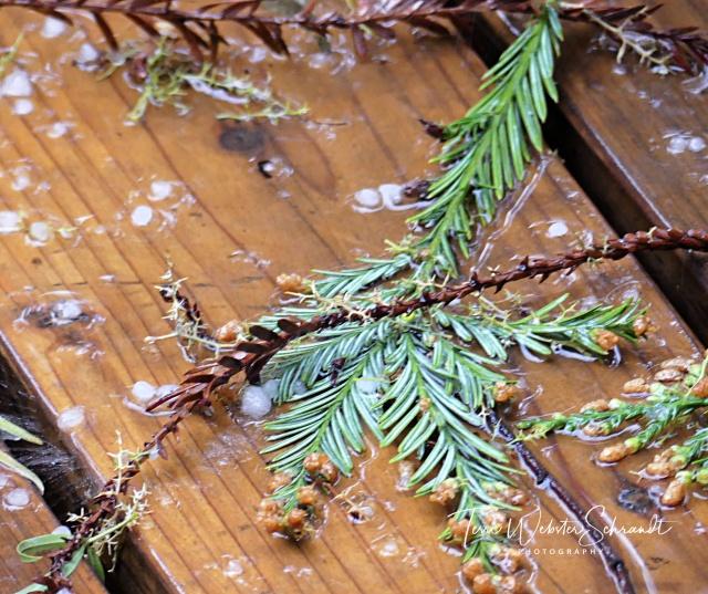 Fallen debris from spring storm