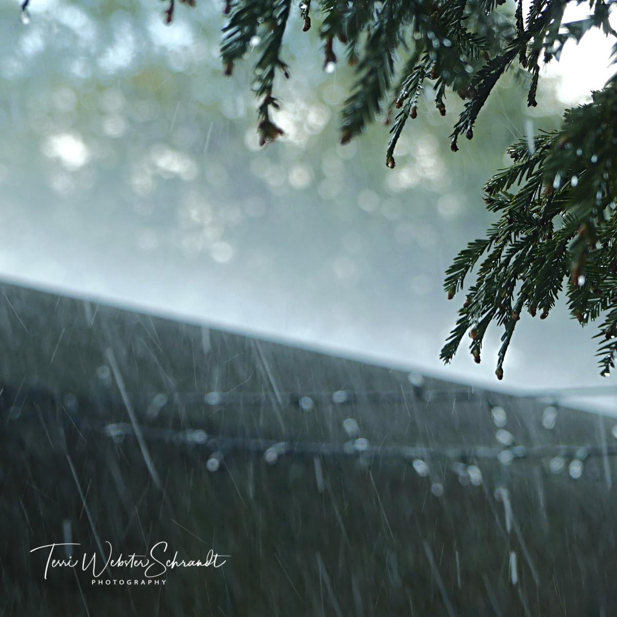 Sunday Stills: #Rain, Rain…Another Day - Second Wind ...