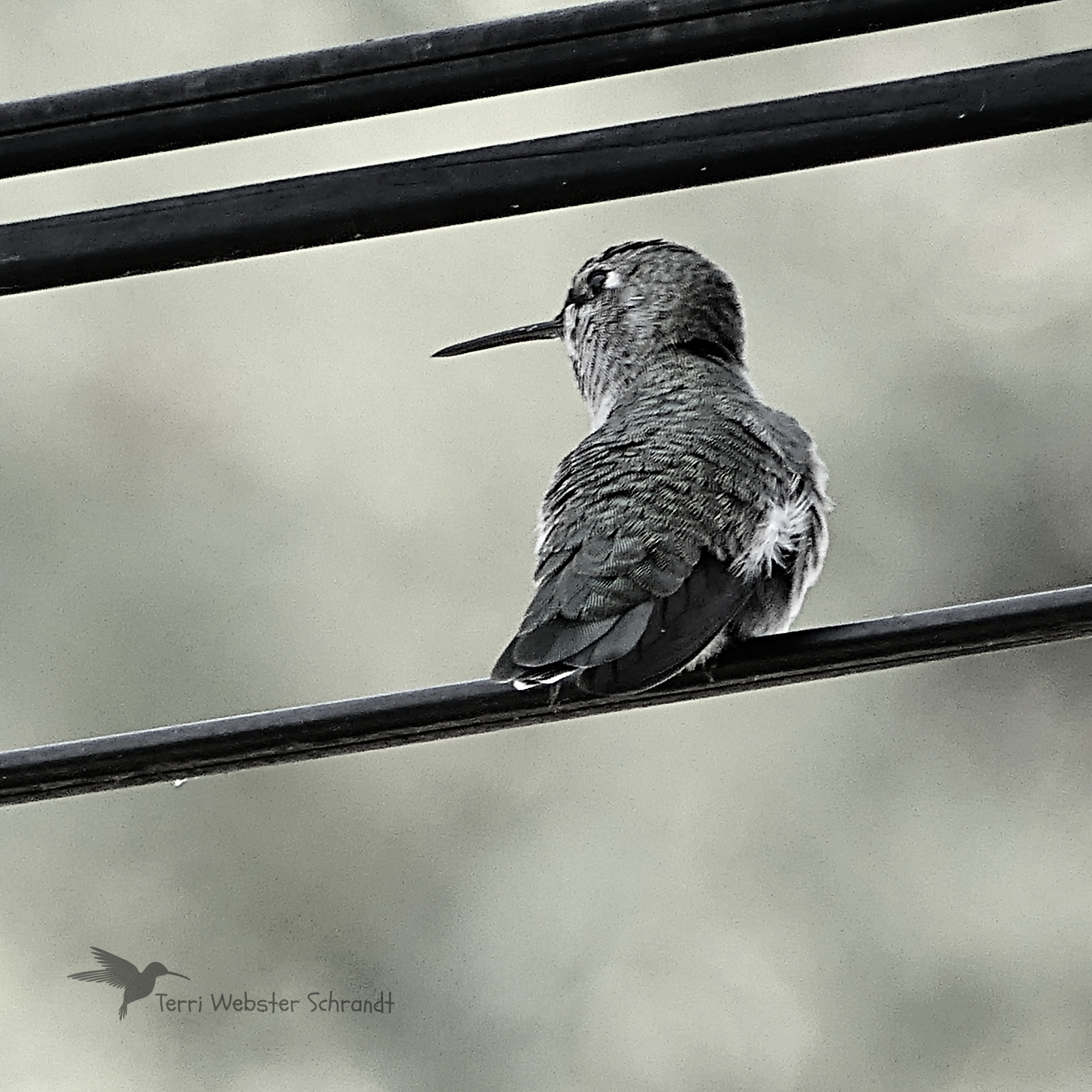Hummer shades of gray