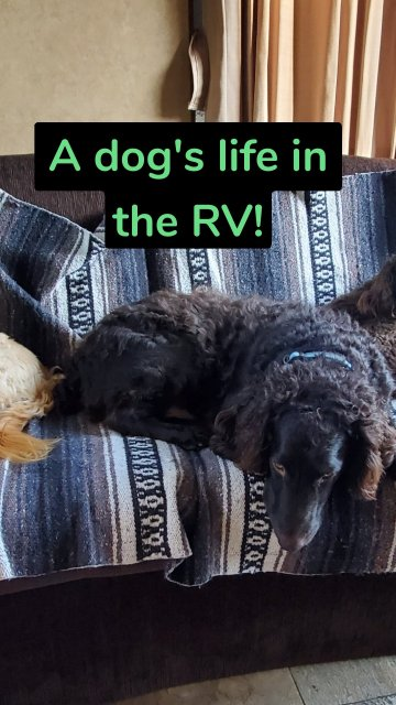 A dog's life in the RV!