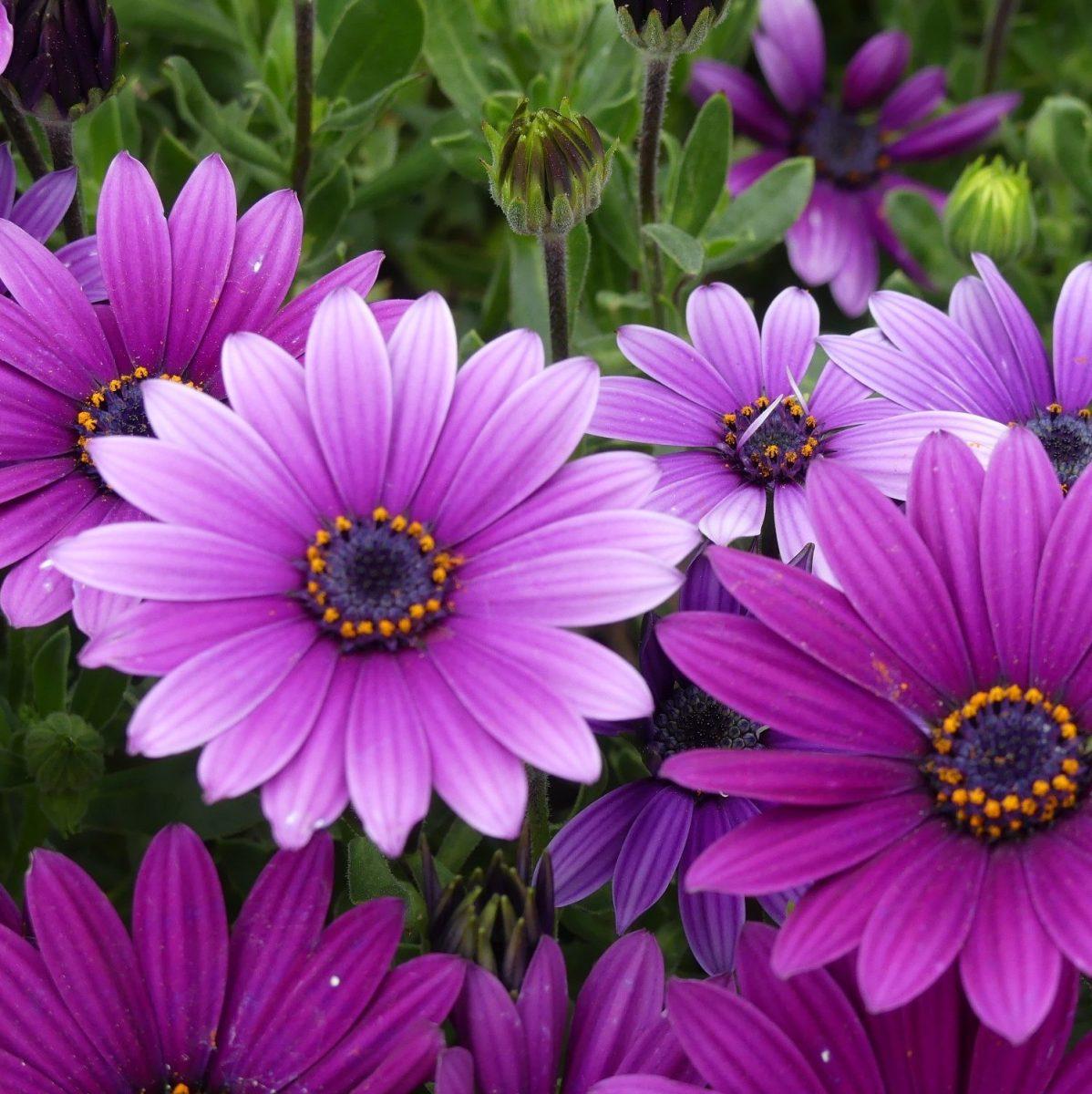 Sunday Stills Monthly Color Challenge: Views in #Violet