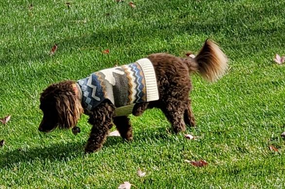 Aero in sweater