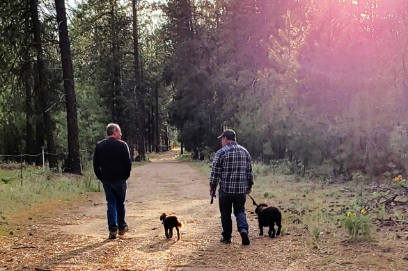 Walking dogs on a trail
