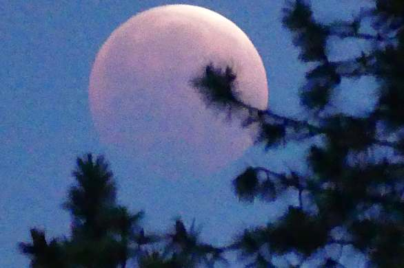 Pink moon in eclipse