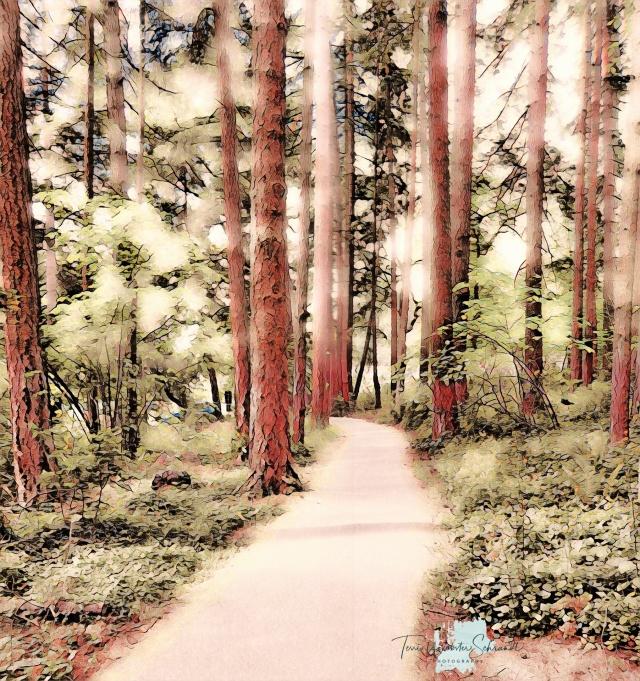 Painnt Filter Forest