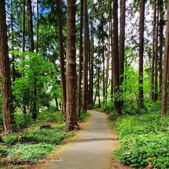 Suburban pocket forest