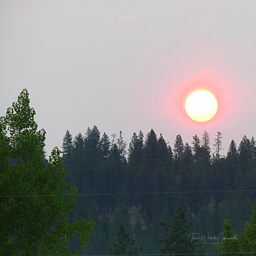 Smokey orb over pine trees