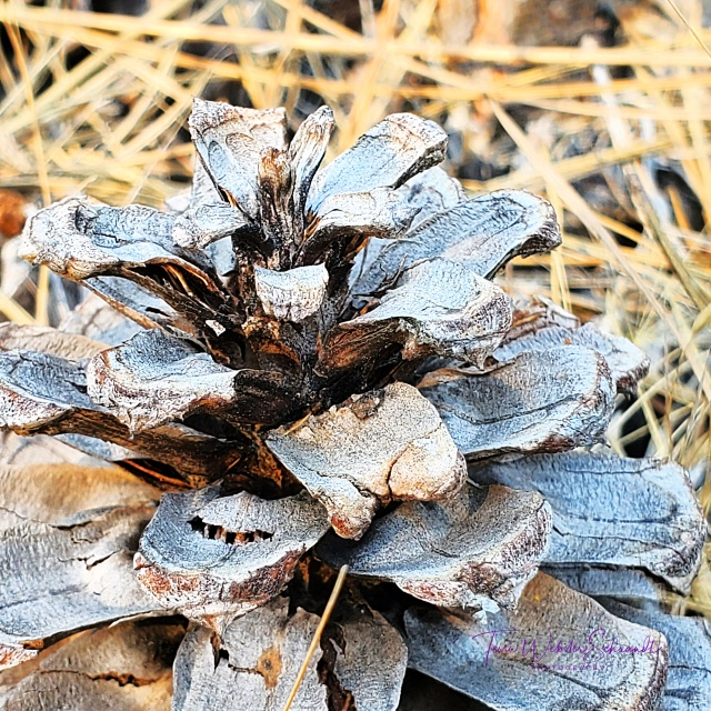 Pinecone within angles
