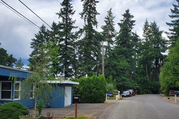 suburban pine forest
