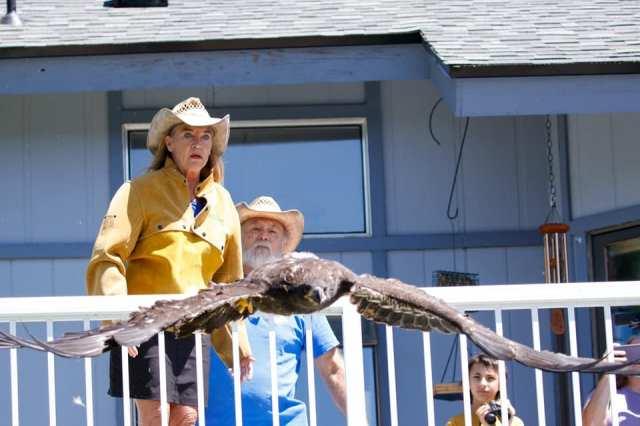 Eagle released © Tina Penny, Volunteer BOPNW