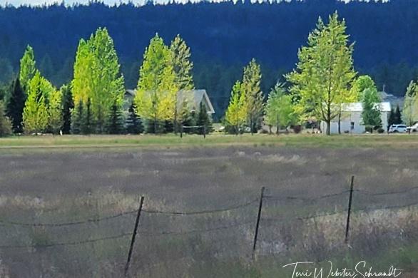 Spokane Mountain Views