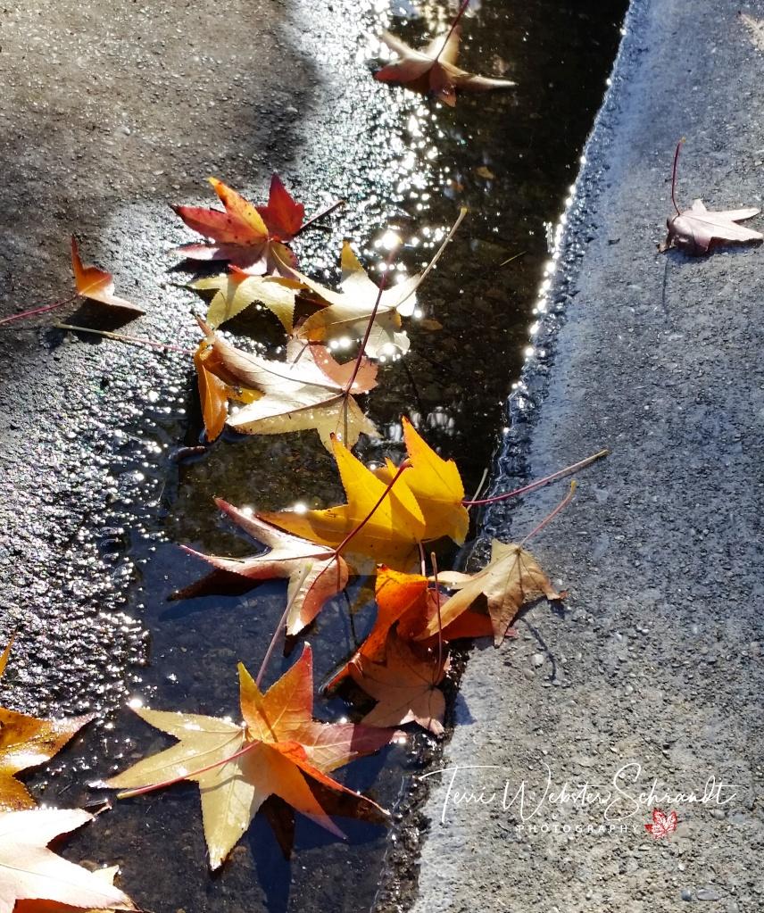 Fallen reflected leaves