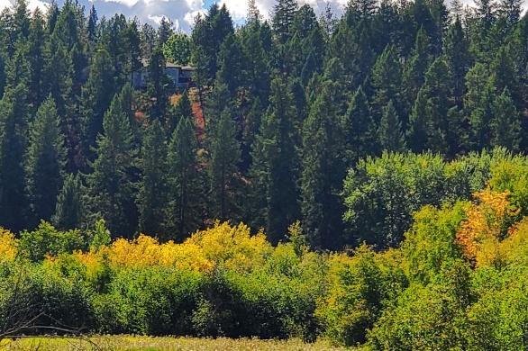 Little Spokane River nature Trail