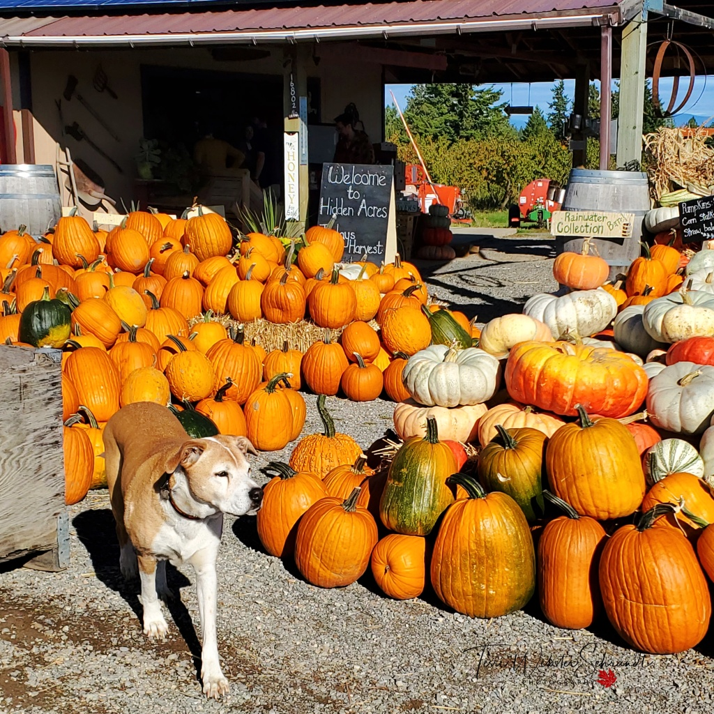 Pumpkin Patch and Dog